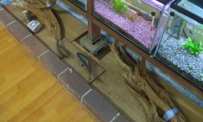 流木コーナー
