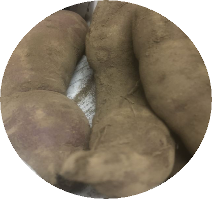 サツマイモ2種類