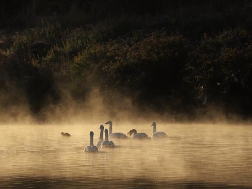朝もやの中を川下へ