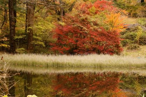 秋には秋の良さも