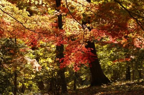 森林公園紅葉2
