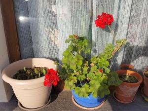 gardening01192