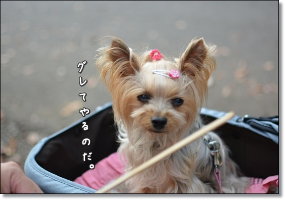 DSC_0450.jpg