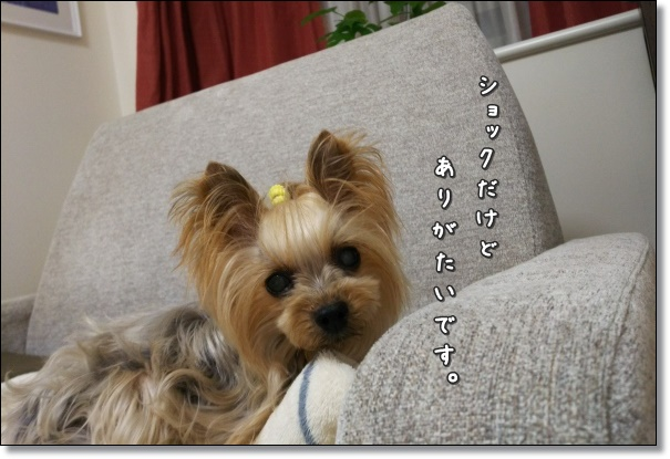 DSC_3062.jpg