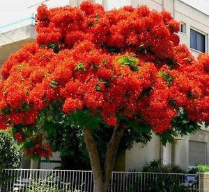フレーム オフ フォレスト 神様の木