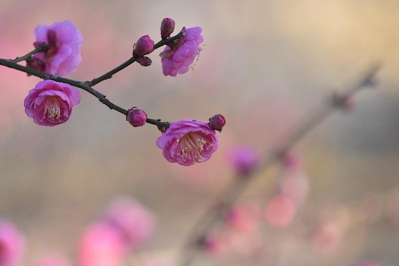 春告草の吐息