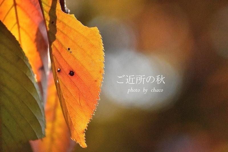 ご近所の秋