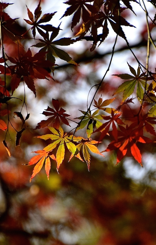 秋 彩りて