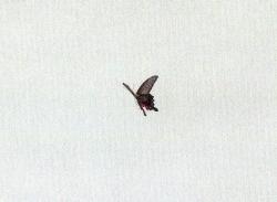 松崎img348