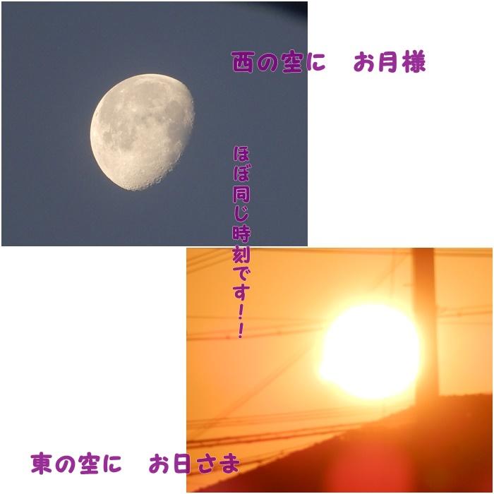 まる310126A