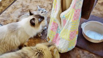 ちょっと変わった猫用ベッド! その2 1
