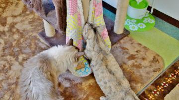 ちょっと変わった猫用ベッド! その2 2