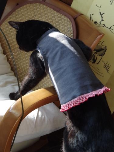 きなみちゃん 猫服 にゃんこ服