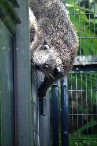 ビントロング チビントロングのブーン君 福岡市動物園