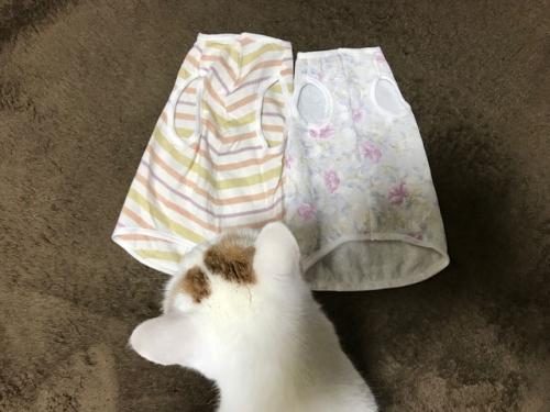 猫服 にゃんこ服 ルナたん