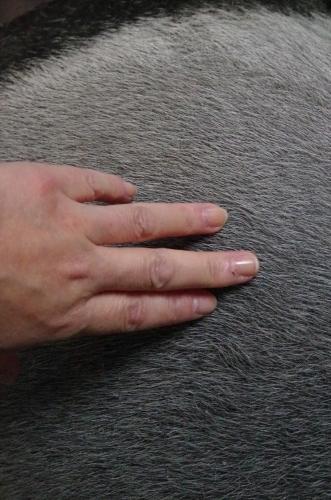 4月27日、世界規模でのバクの日撮影 マレーバク ユメコちゃん