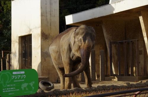 日本平動物園 象