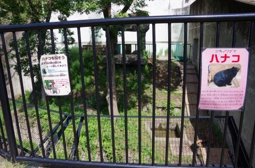 ツキノワグマ ハナコちゃん 福岡市動物園 放飼場