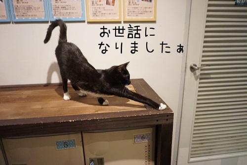 カワウソ20181021-02