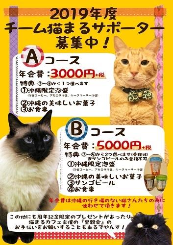 チーム猫まるポスター2019年度