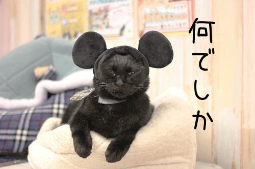 こしろう相談役20190104-01