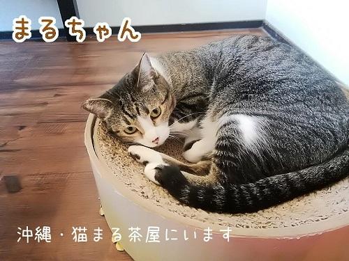 まるちゃん20190111
