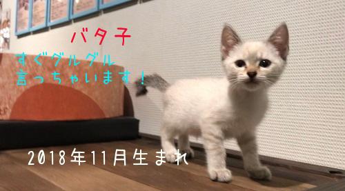 バタ子20190111