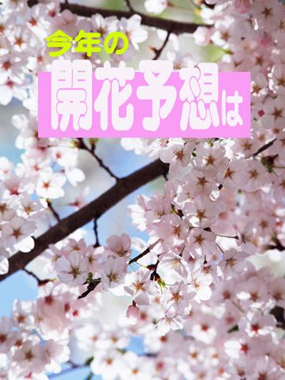 2170215桜開花予想2