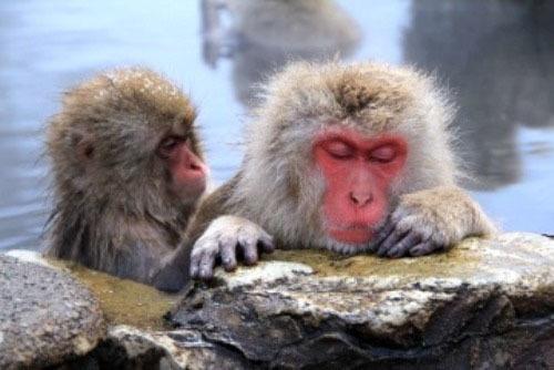 2019猿温泉 ブログ1