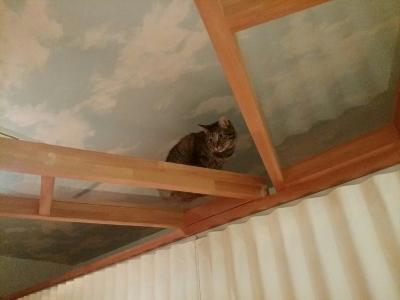 カフェ内ノラ猫、ハナちゃん