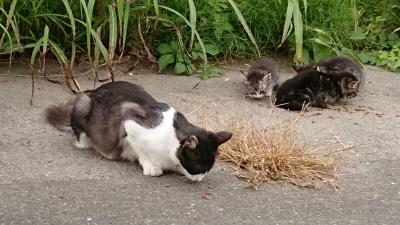 ママにゃんと子猫達①