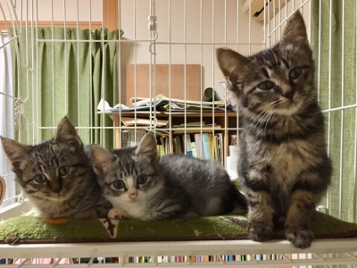 子猫たち、勢揃い