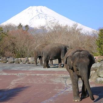 富士サファリ1