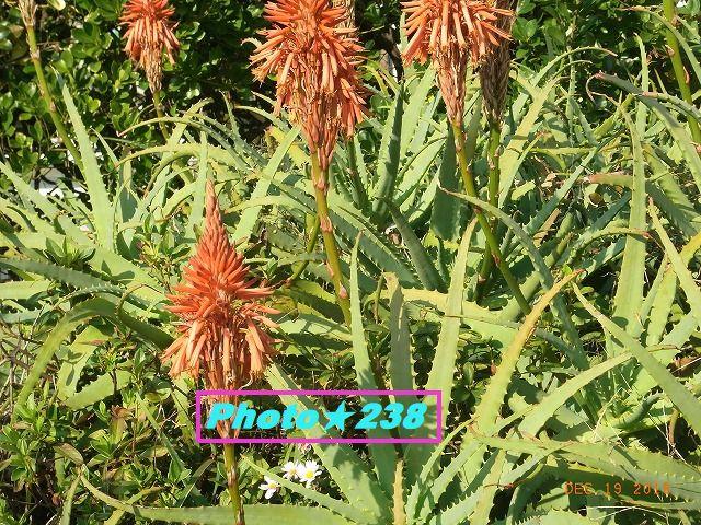 181219床屋の花。