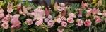 ピンクの花jpg