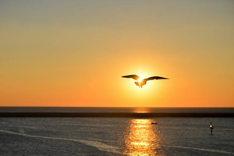 s-sea-sunset-bird-flying.jpg
