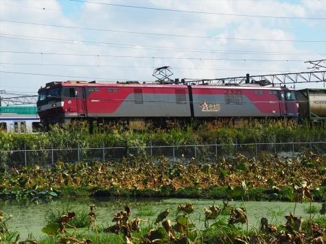 JR貨物 EH500-7 電気機関車【土浦運輸区付近】