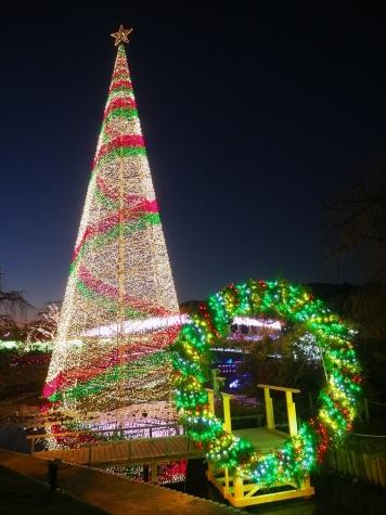 クリスマスツリー【あしかがフラワーパーク】