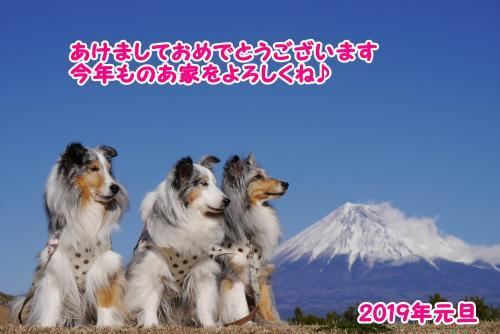 P1350113_convert_20190101170023.jpg