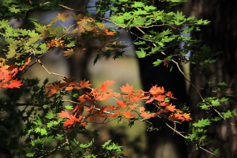 紅葉の始まり 2.jpg