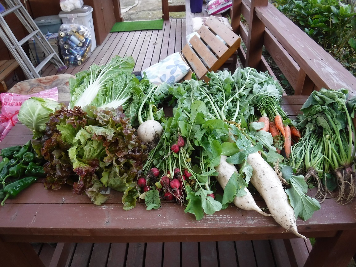 ブログ 頂きものの野菜達.jpg