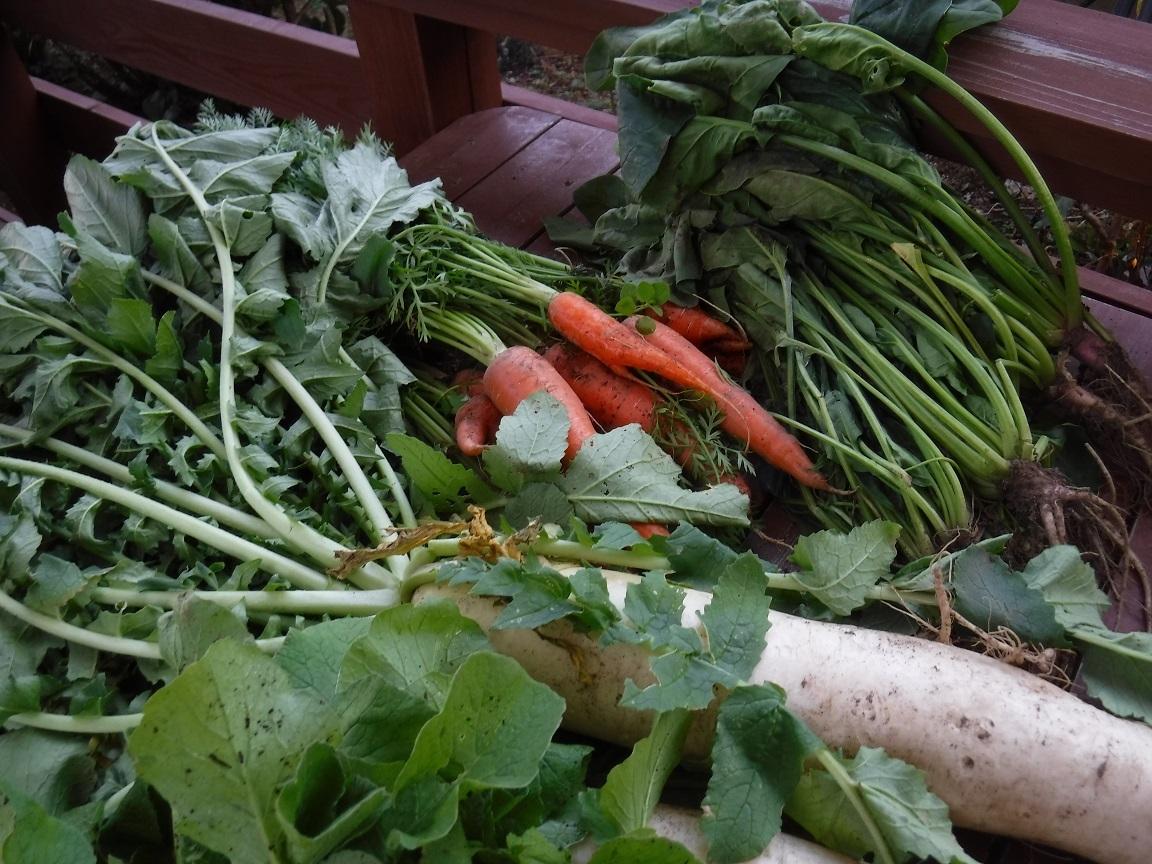 ブログ 元気な野菜達 2.jpg