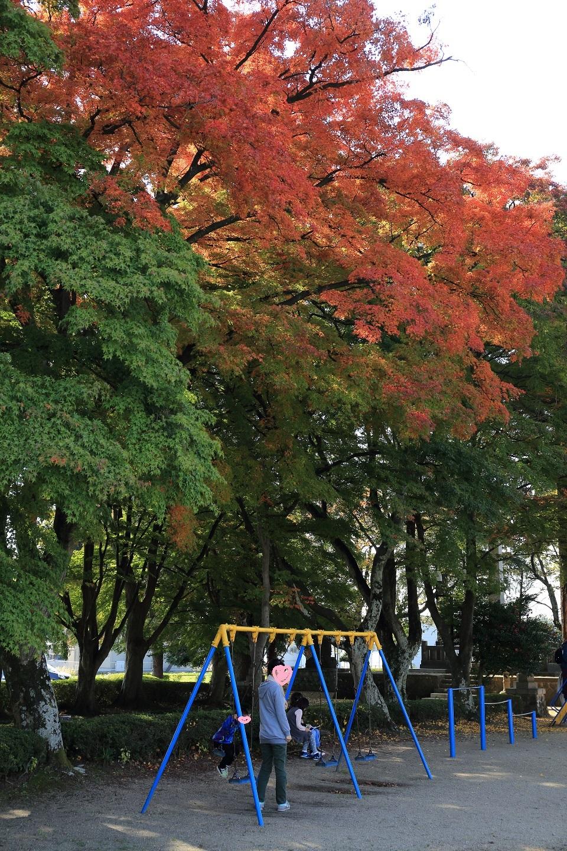 ブログ 大山参道の児童遊園地のモミジ.jpg