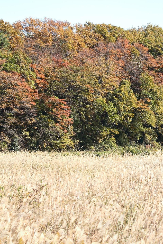 ブログ 葦原とモミジと空と.jpg