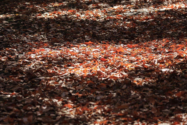 ブログ 木漏れ日の落ち葉の道.jpg