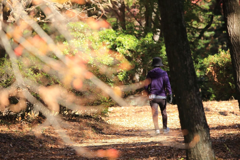 ブログ 枯れ葉道のお散歩.jpg