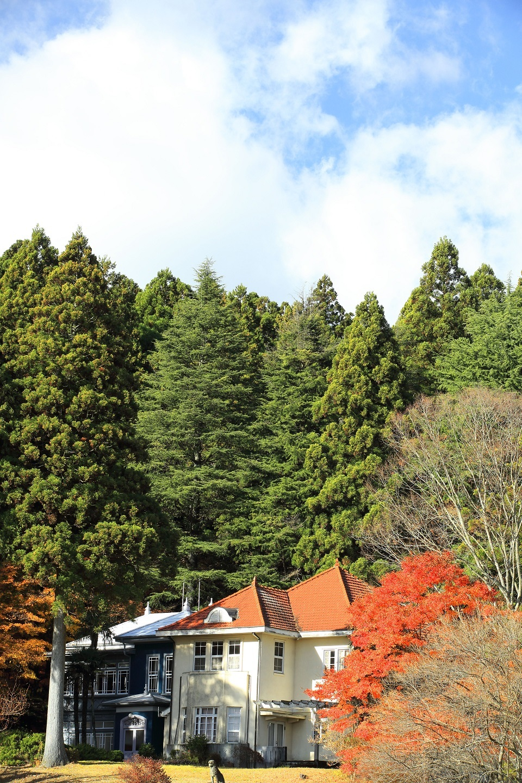 ブログ 森に抱かれた山が別荘.jpg