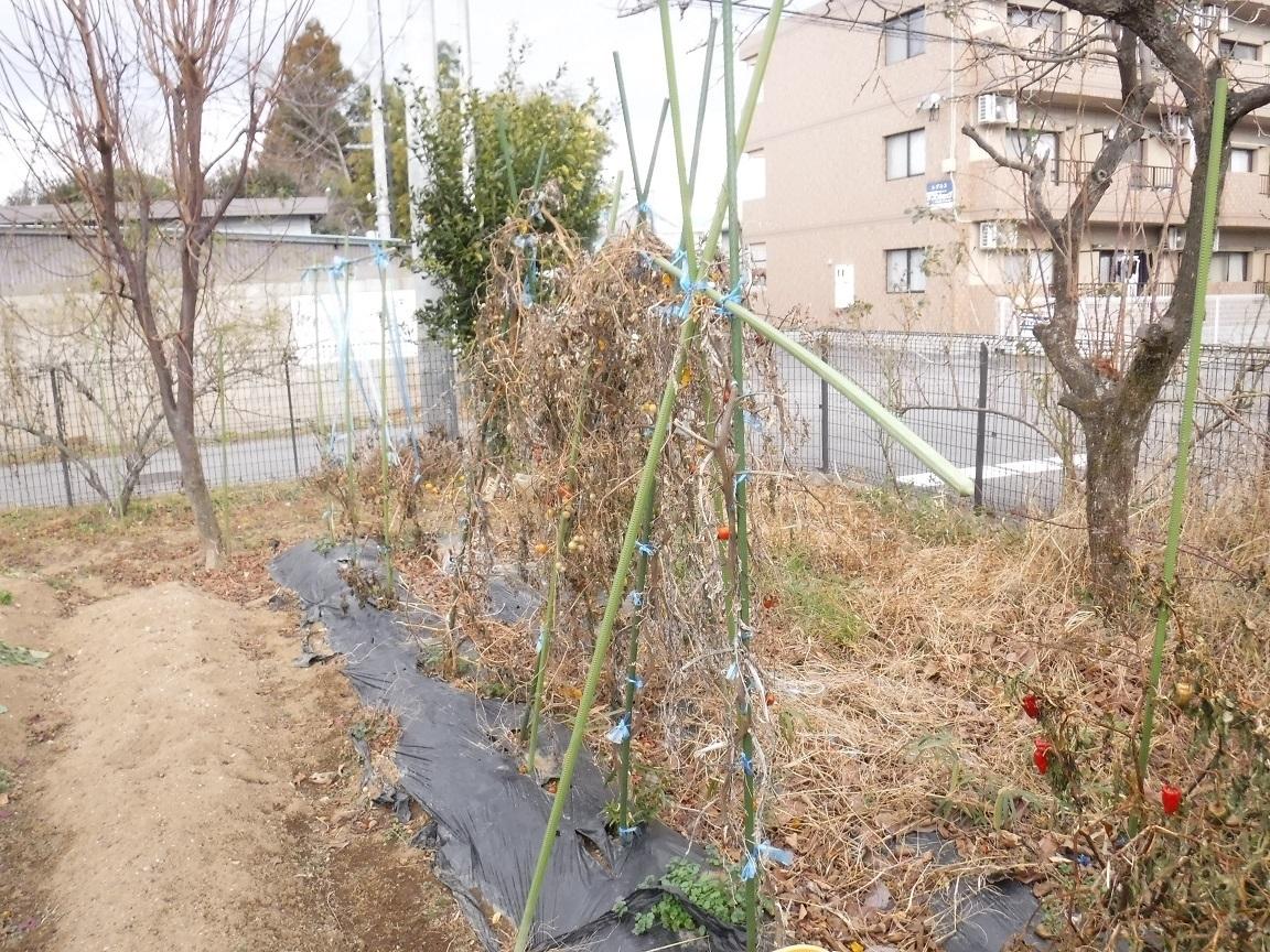 ブログ 菜園の後片付け.jpg