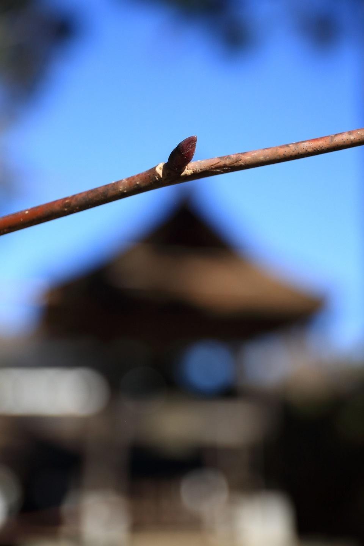 ブログ 新春の芽吹き 鐘楼の前で.jpg