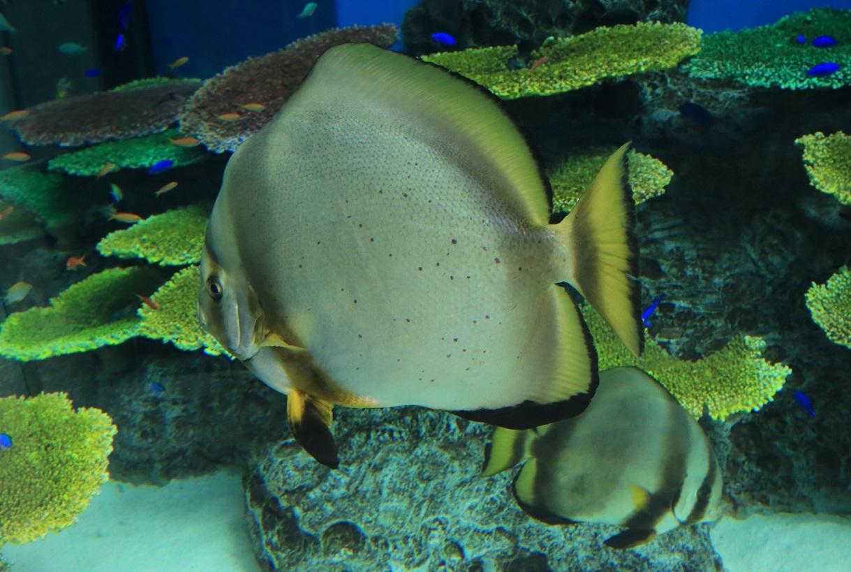 ブログ 熱帯魚1.jpg